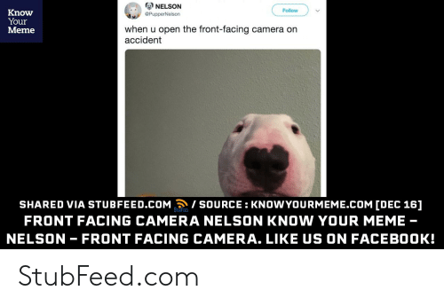 Front Facing Camera Nelson The Bull Terrier Walter Know Your