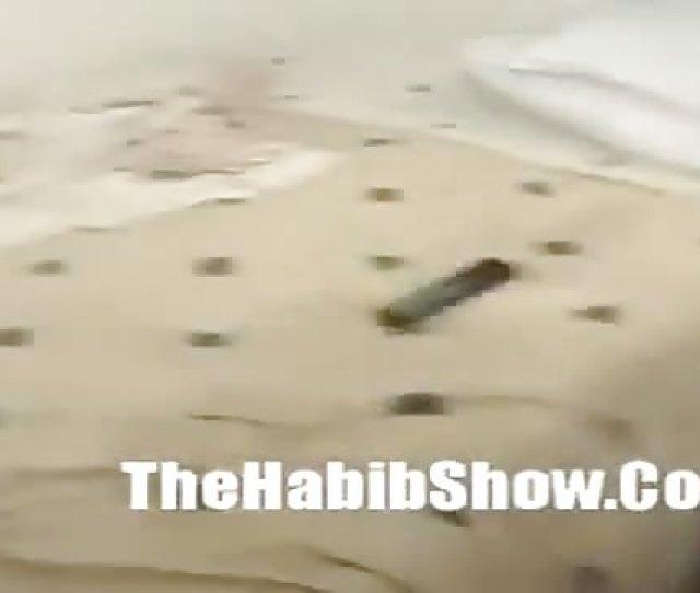 The Habib Show 2