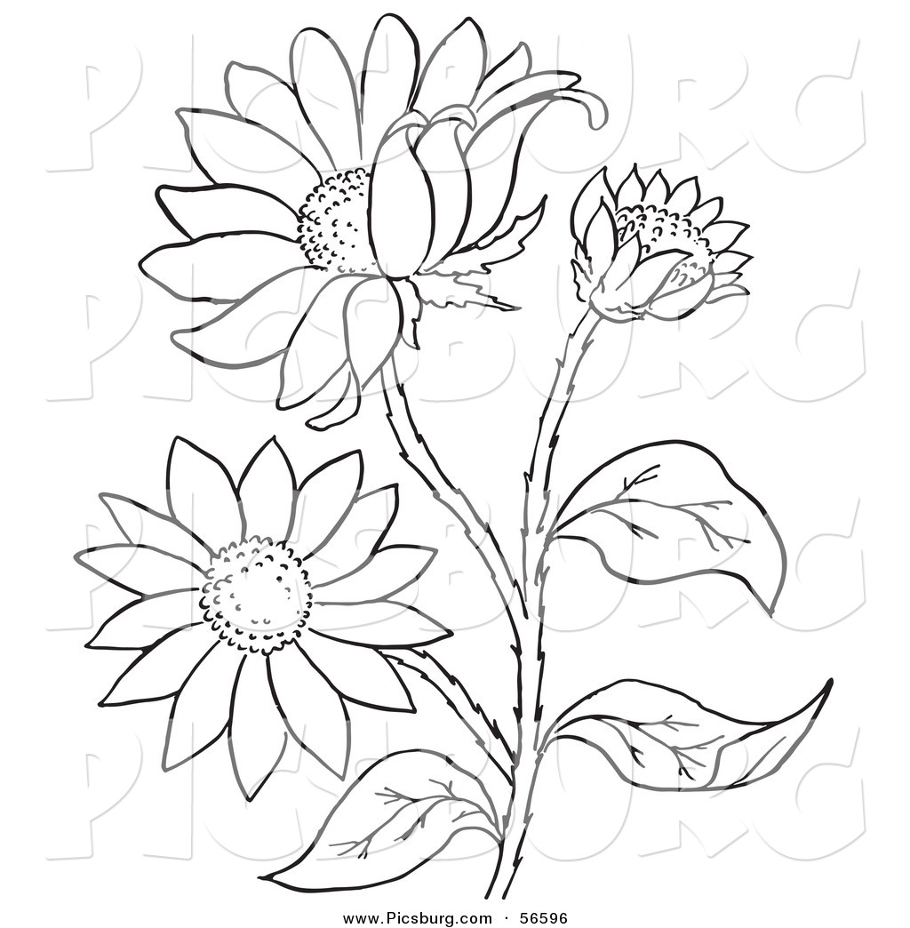 Clip Art Of A Coloring Page Of A Black Eyed Susan Flower