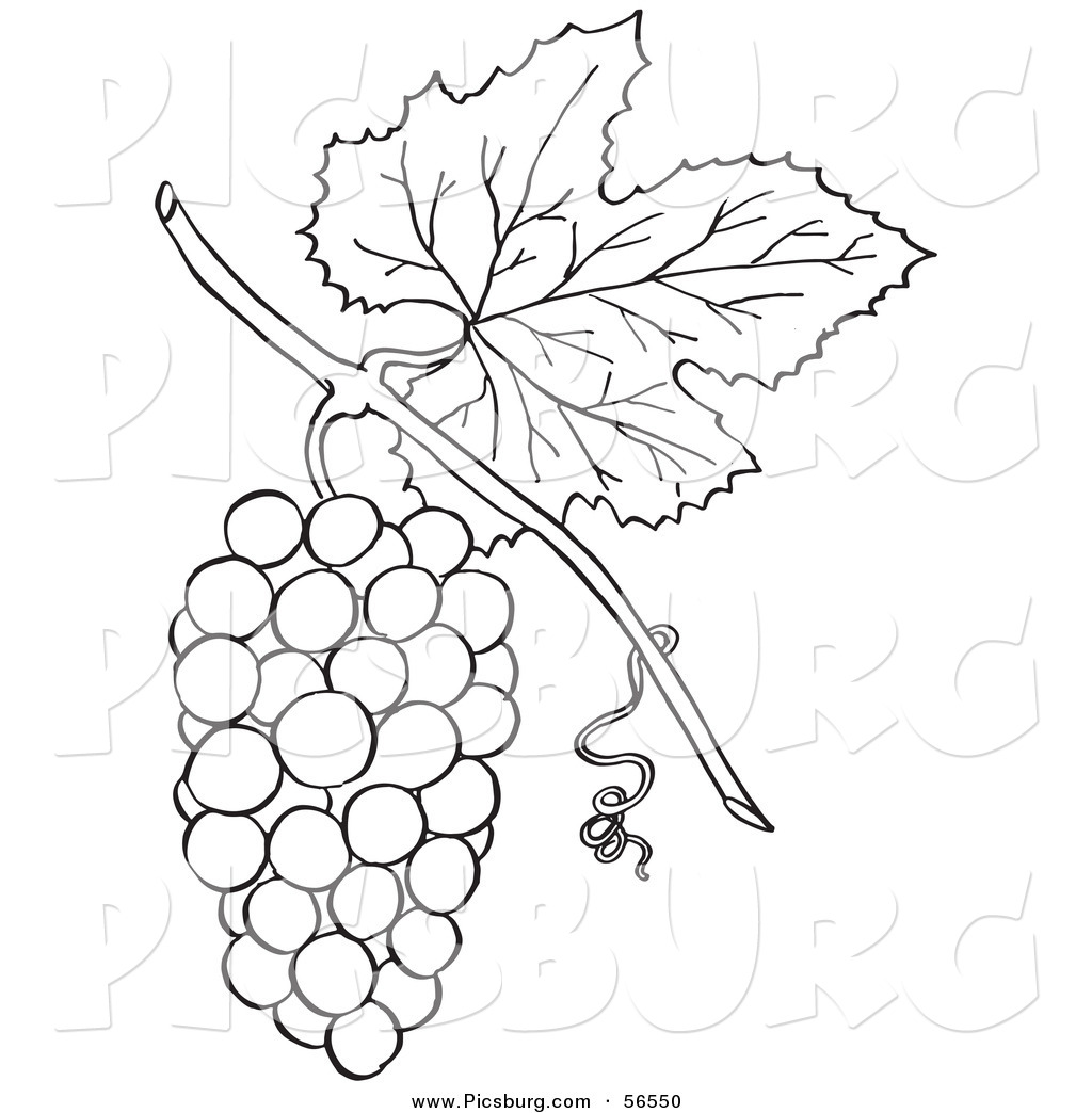 clip art of a coloring page of a bunch of grapes with a leaf by