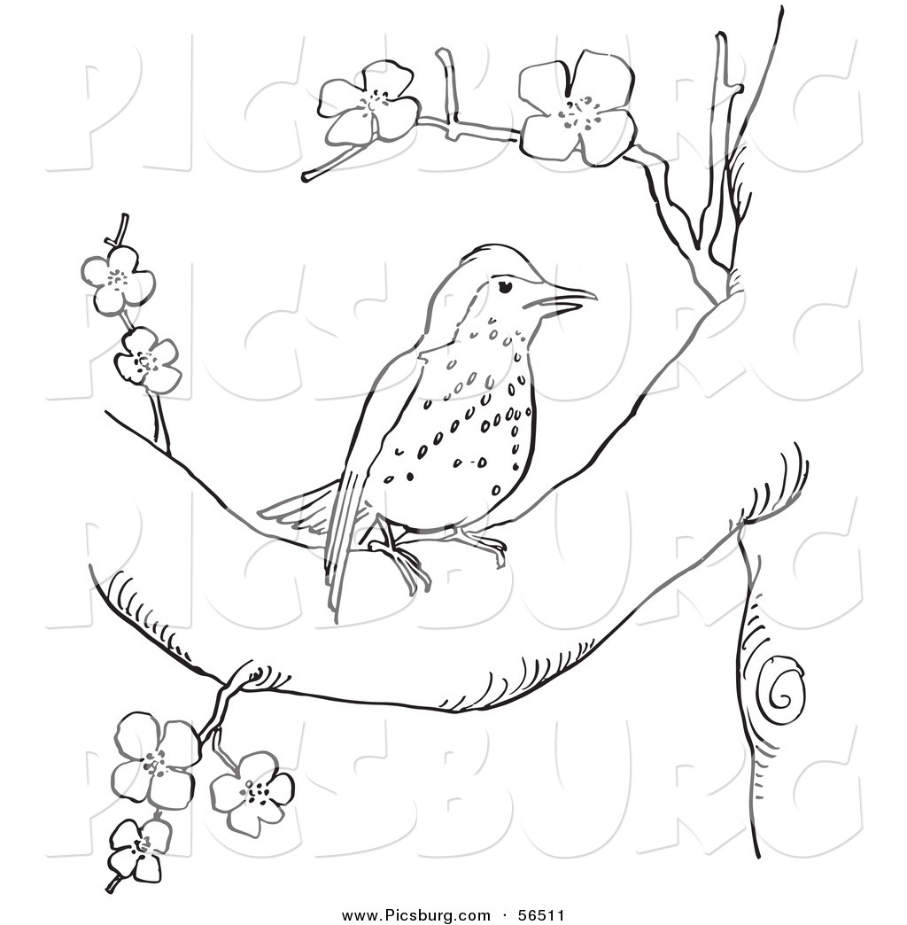 Clip Art Of A Wood Thrush Resting In A Blossoming Tree