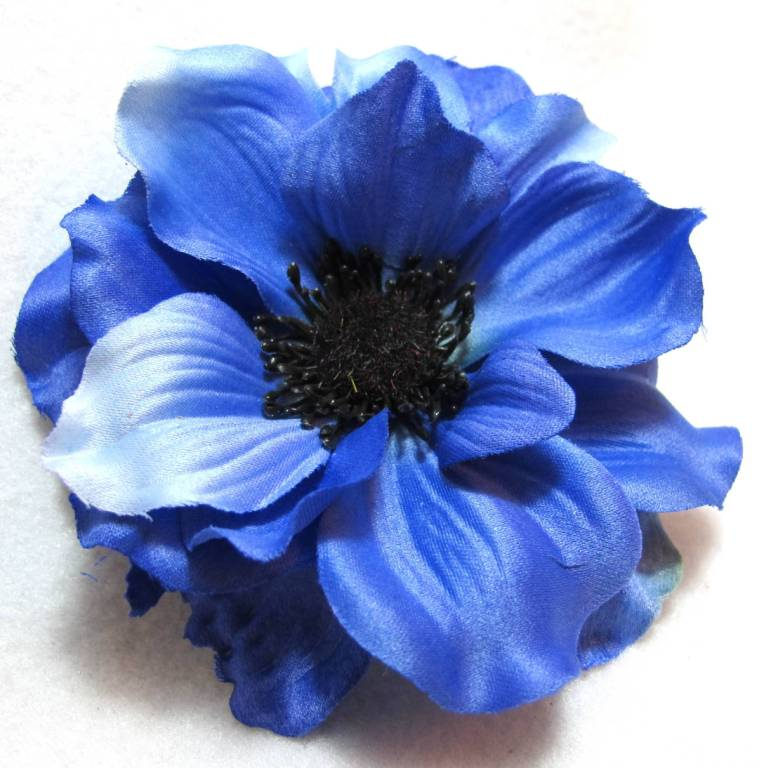 Amazing Blue Anemone Flower Wallpaper