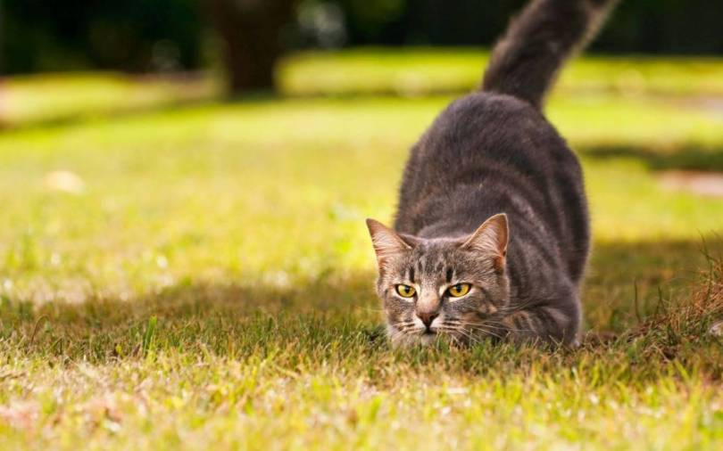 Amazing Cheerful Cat Playing In The Green Grass 4K Wallpaper