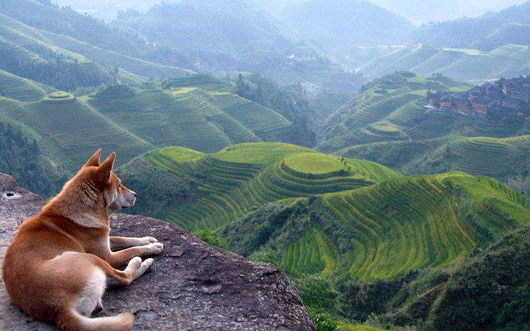 amazing-dog-on-a-atmospheric-perspective-hd-wallpaper