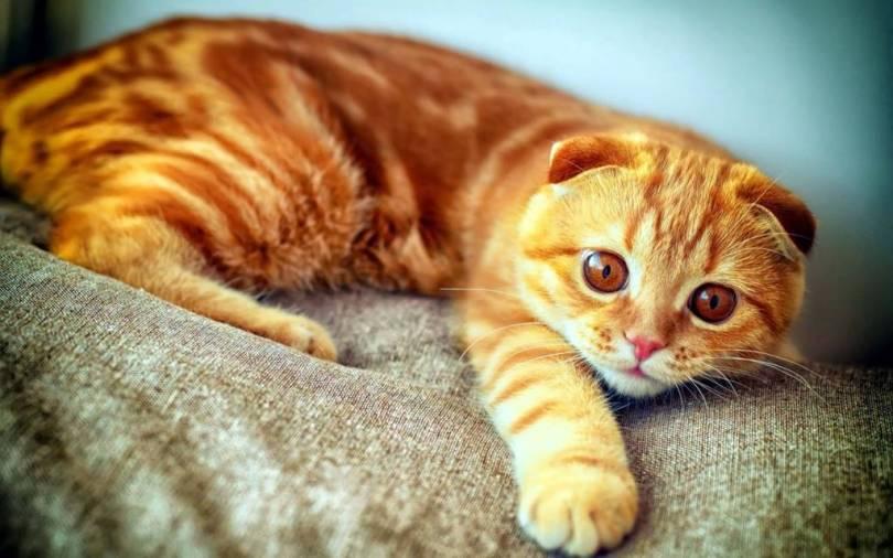 Beautiful Cat On The Sofa