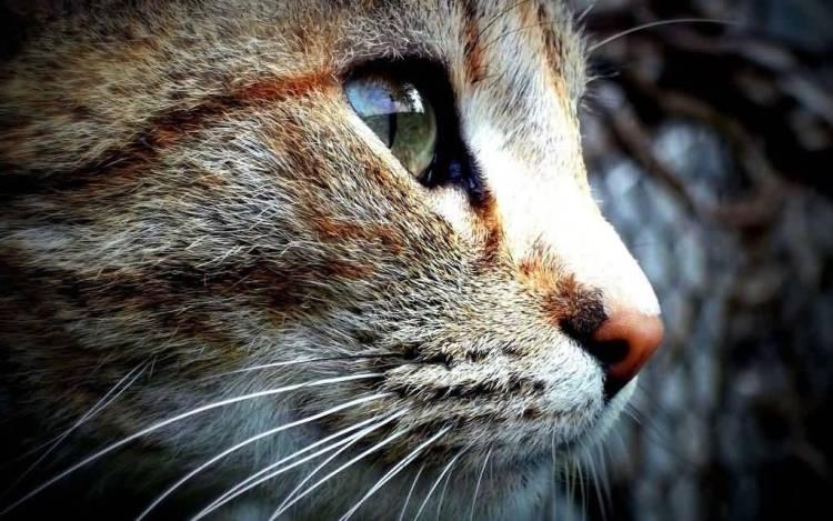 Beautiful Eyes Of A Nice Cat Full Hd Wallpaper