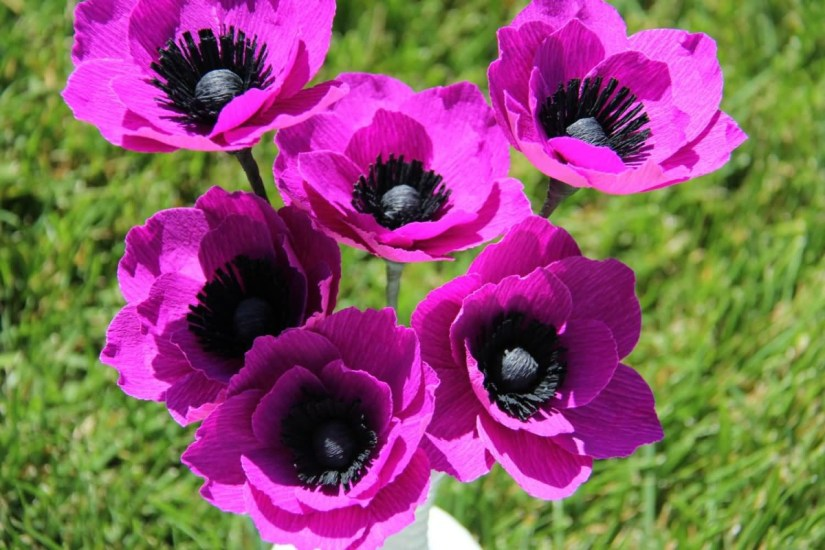 Beautiful Pink Anemone Flower With Lovely Background
