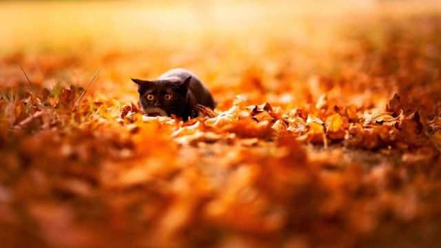 Cute Dog And Autumn Leaves Hd Wallpaper