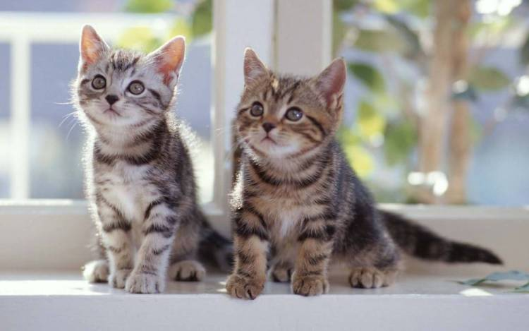 Cutest Two Cats Next To The Window 4K Wallpaper