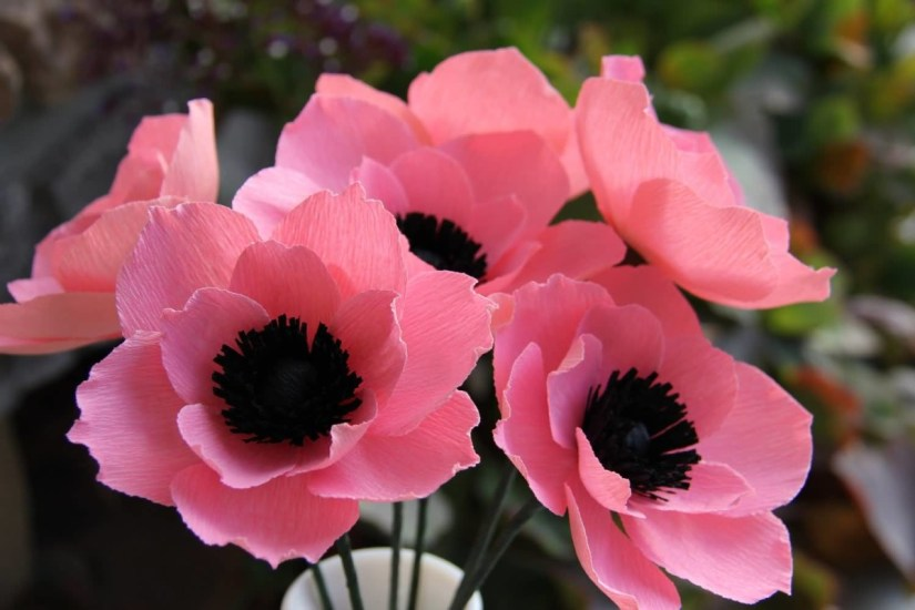 Decorative Pink Anemone With Black Combination Flower