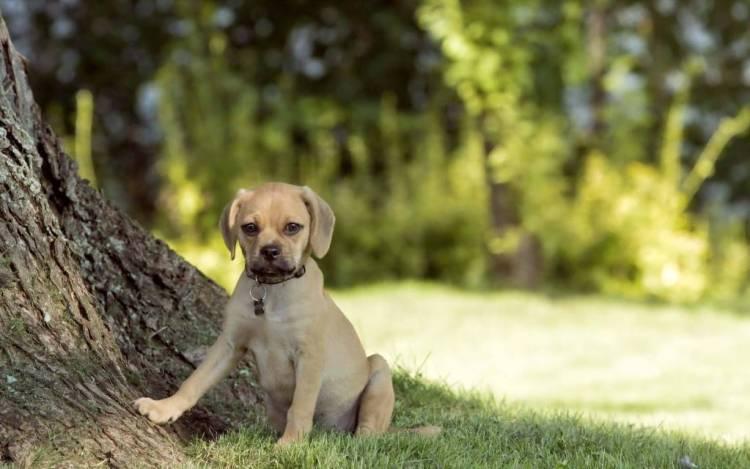 Dog Sitting Under The Tree Full Hd Wallpaper