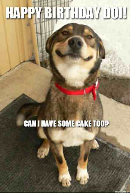 Dog most Funny Birthday Wishes Image