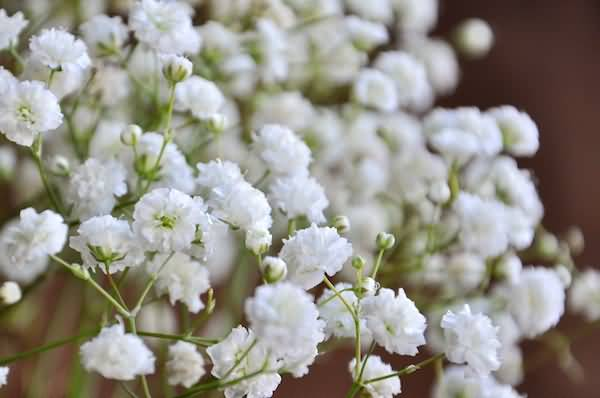 Eye Catching White Baby's Breath Flower For Decoration