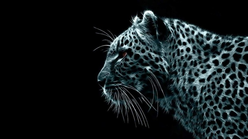 Fantastic Black Picture Of Leopard Full Hd Wallpaper