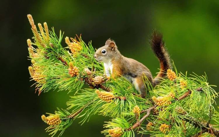 Fantastic Squirrel 4k Wallpaper