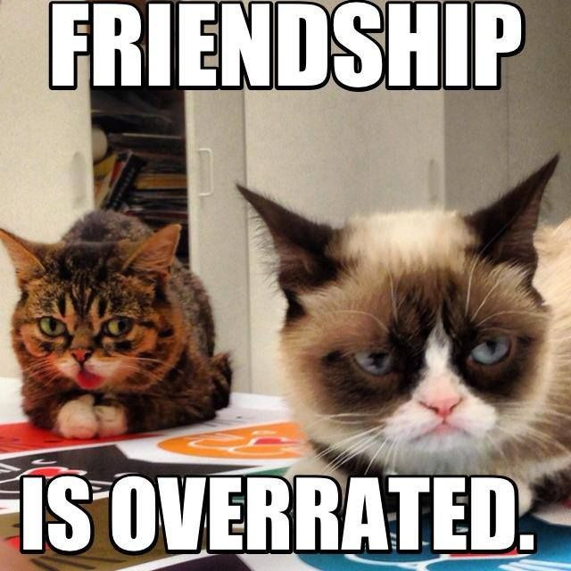Friendship Is Overrated Grumpy Cat Meme