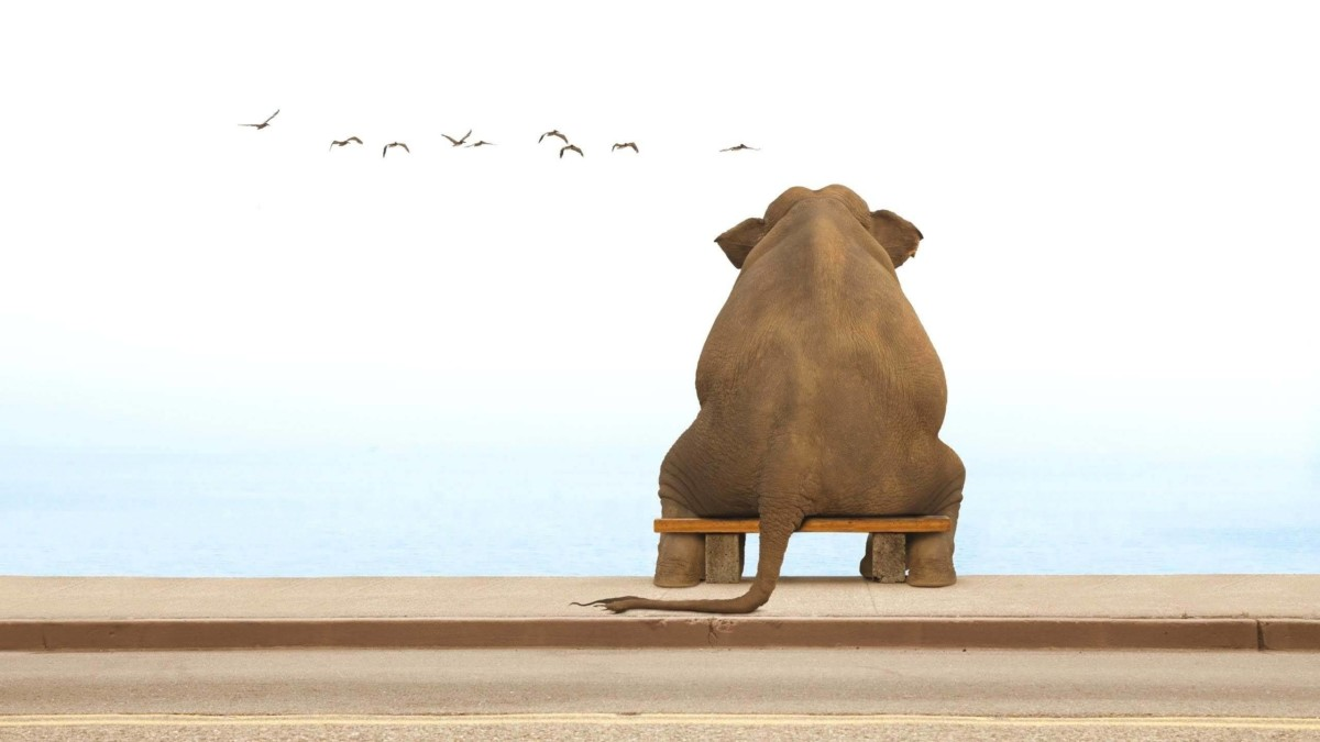 Funny Elephant Sitting On Bench