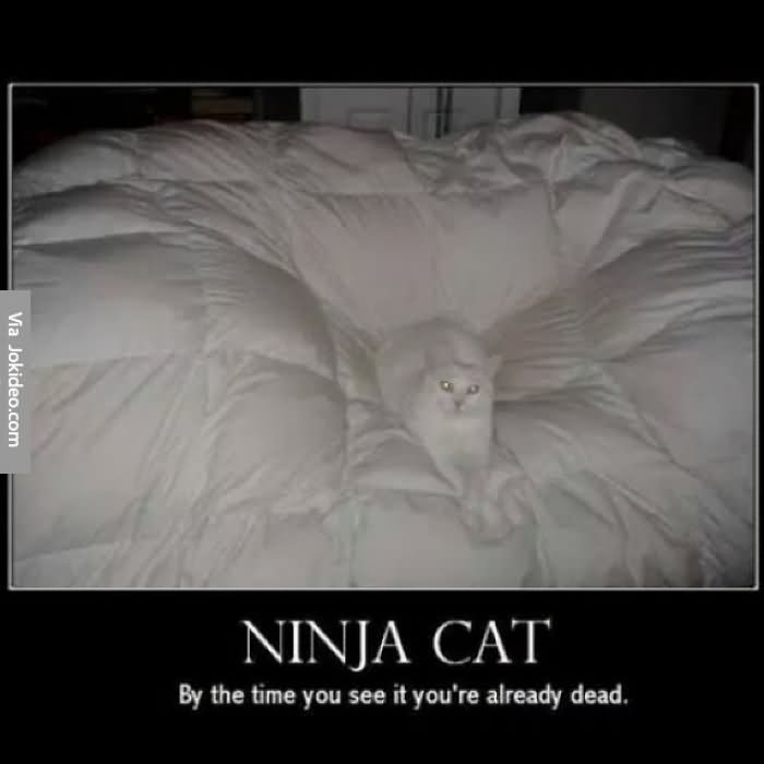 Funny Ninja Memes Ninja Cat By The Time You See It Youre Already Dead Image