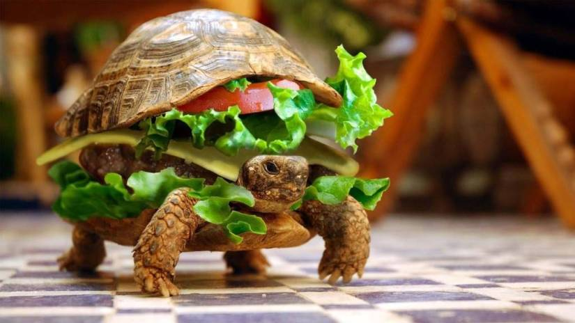 Funny Turtle With Vegetables Full Hd Wallpaper