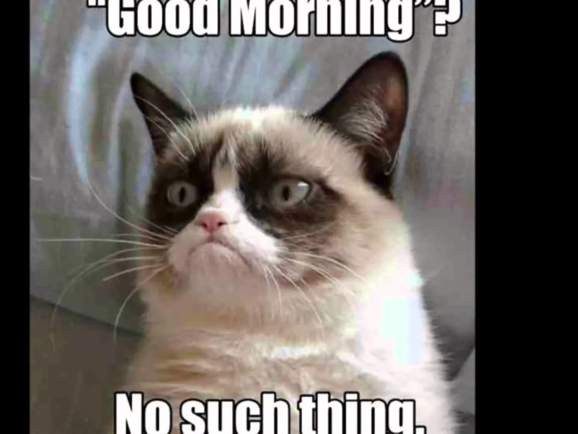 Good Morning No Such Thing Grumpy Cat Meme