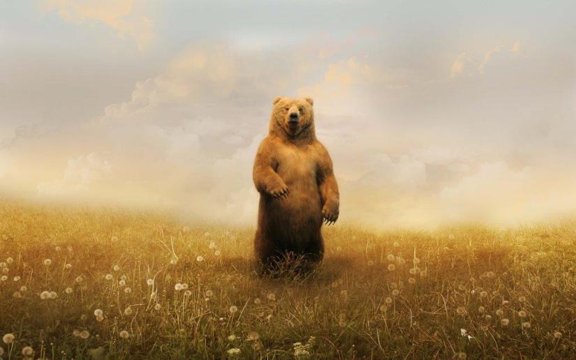 Grizzly Bear Standing In The Wild Full Hd Wallpaper