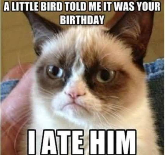 Grumpy Cat Memes A Little Bird Told Me It Was Your Birthday I Ate Him Photograph