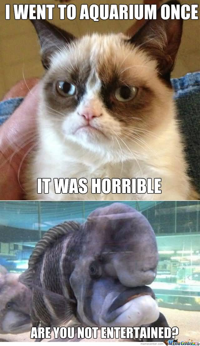 Grumpy Cat Memes I Went To Aquarium Once It Was Horrible Snap