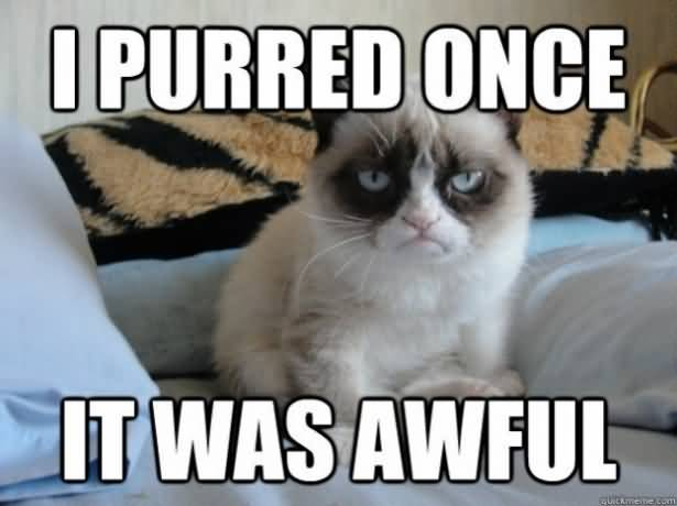 Grumpy Cat Memes I Purred Once It Was Awful Picture