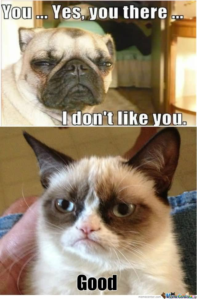 Grumpy Cat Memes You Yes You There I Dont Like You Good Picture