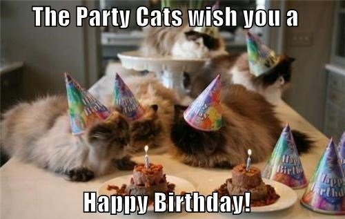 Happy Birthday Cat Party Celebration Image