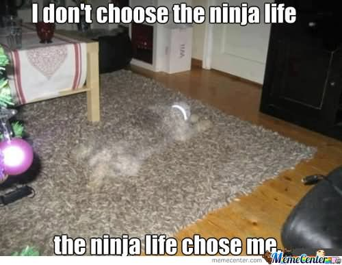 i Dont Choose The Ninja Life The Ninja Life Choose Me Funny Ninja Memes