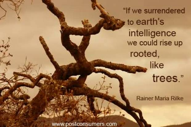 If we surrenderedto earths intelligencewe could rise up rooted like Rainer Maria Rilke