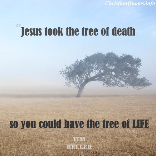 Jesus Took The Tree of Death So You Could Have The Tree of Tim Keller