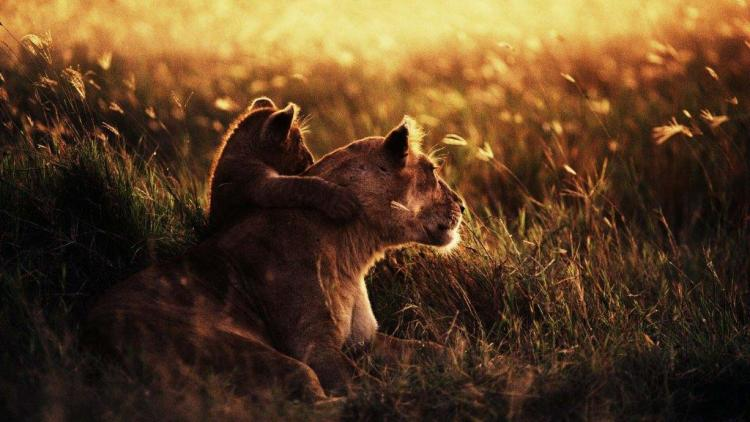 Little Cub With His Mother Very Touching Full Hd Wallpaper
