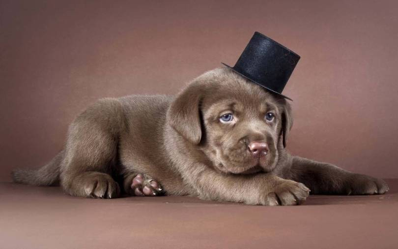 Little Cute Dog Wearing A Hat 4k Wallpaper