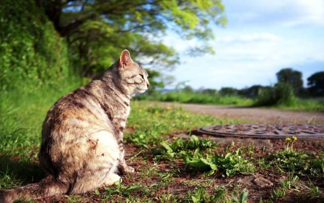 Lovely Cat On The Road full HD wallpaper