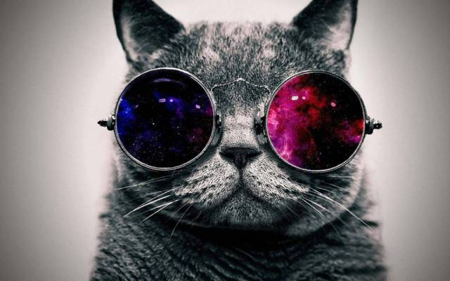 Most Amazing Stylish Cat With The Sunglasses 4K Wallpaper