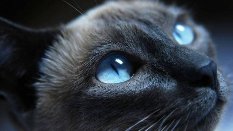Most Unique Cat And Beautiful Eyes Together 4K Wallpaper