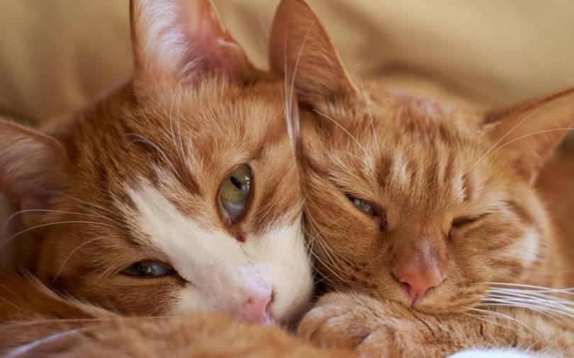 Most Wonderful Two Beautiful Cats Full Hd 4K Wallpaper