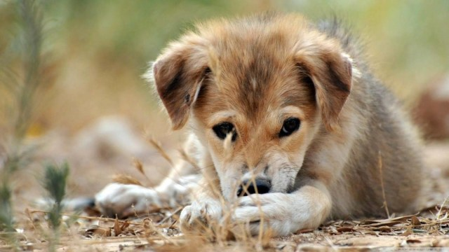Nice A Small And Sad Dog Full Hd Wallpaper