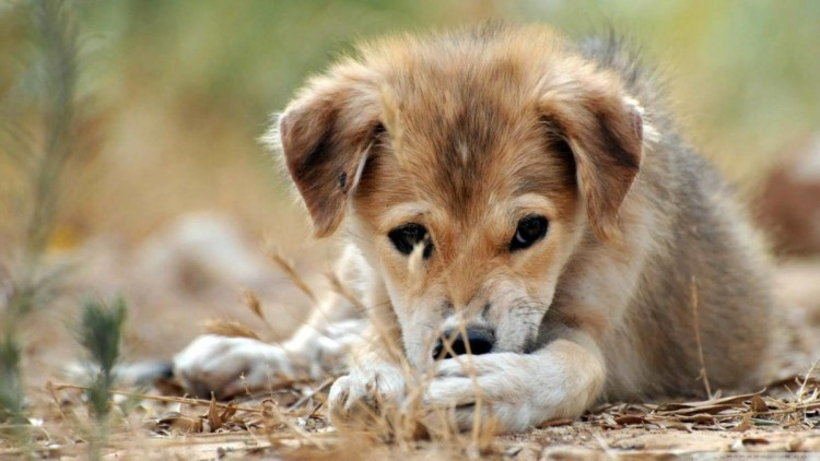 Nice A Small And Sad Dog Full Hd Wallpaper