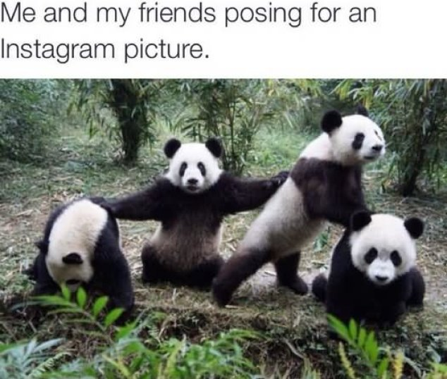Panda Bears Funny Best Friend Meme Picture
