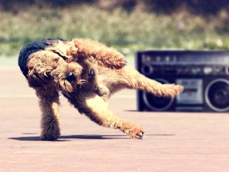 Playful Dog Next To The Cassette 4k Wallpaper