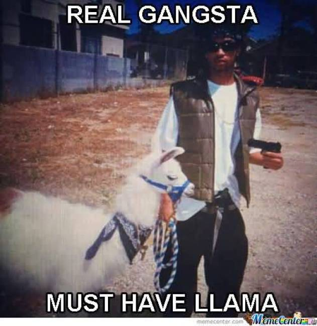 Real gangster must have llama Hilarious Gangster Meme Photo