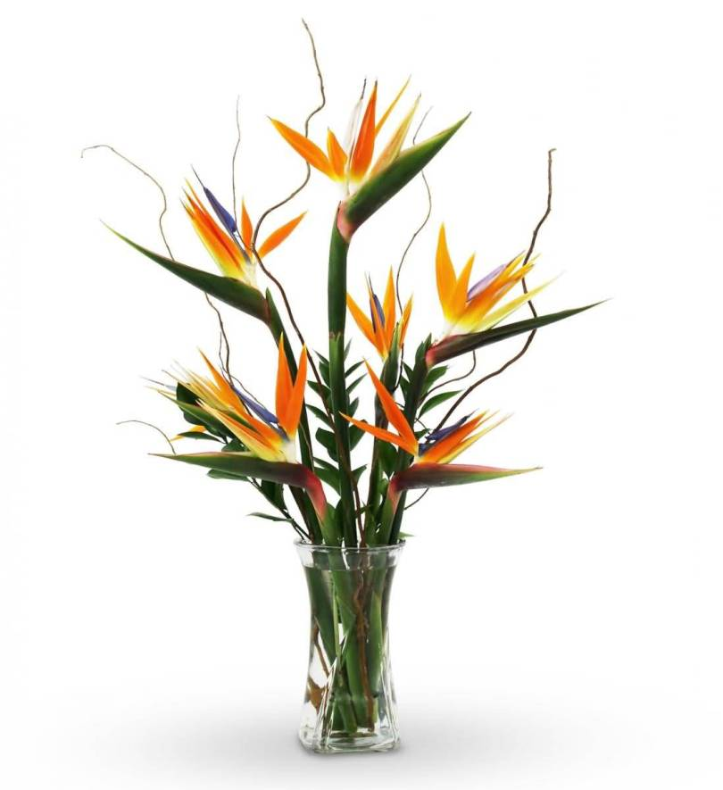 Stunning Bird Of Paradise Flower For Decoration Your Home