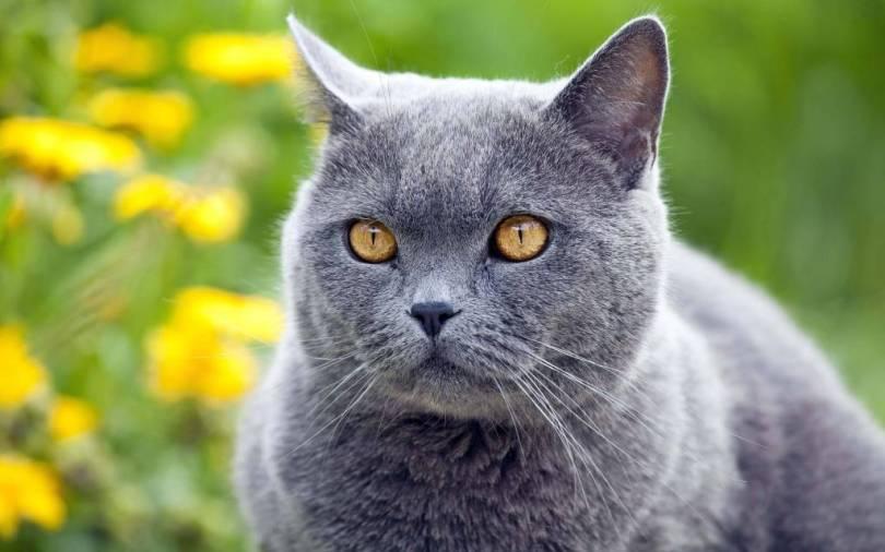 Stunning cat With Amazing Eyes 4K Wallpaper