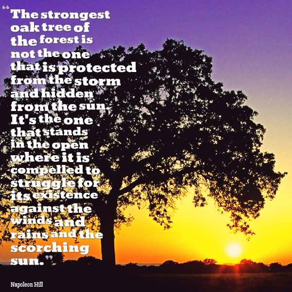 The strongest oak of the forest is not the one that is protected from the storm and hidden from the sun. Its the one that stands in the open where it is Napoleon Hill