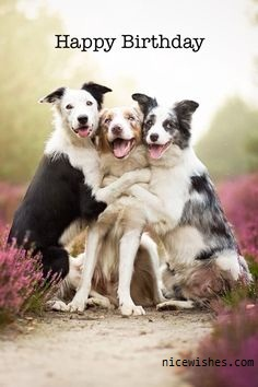 Three Dog Happy Birthday Wishes Image