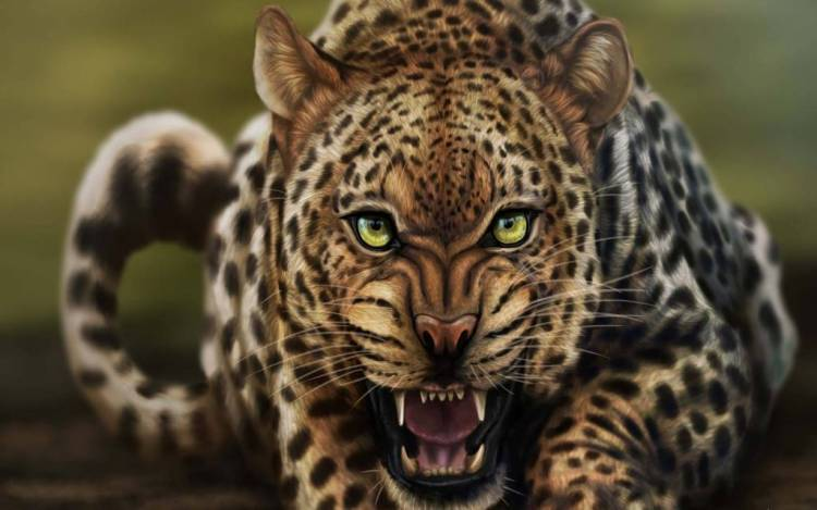 Very Angry Leopard 4k Wallpaper