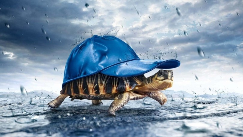 Very Funny Turtle Wearing A Hat Full Hd Wallpaper